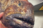 Рыбак из Мурманска прославился в Твиттере благодаря своему улову