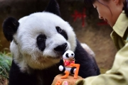 Самая старая в мире панда отметила день рождения: фото с праздника
