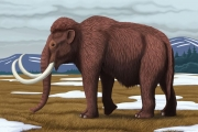 Ученые близки к воскрешению мамонта