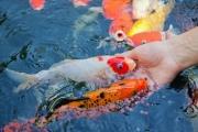 Гражданку России могут лишить свободы за кормление рыбок на острове Пхукет