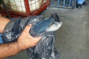 В Бразилии поймали голубя-контрабандиста