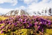 Глобальное потепление ускорило «природные часы» в Арктике