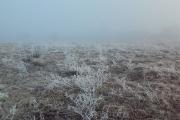 После всплеска тепла в Черноземье пройдут осадки и похолодает