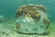 В Южно-Китайском море массово гибнут кораллы