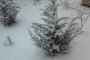 Погода в Черноземье: за снегопадами последует сильная гололедица
