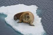 Опасно ли глобальное потепление для Арктики?