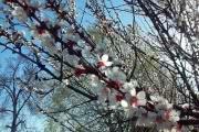 Первомайские праздники порадуют жителей Черноземья солнцем и теплом