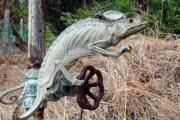 Тропическое солнце превратило хамелеона в мумию