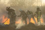 Природный пожар уничтожил 5 тысяч гектаров леса в Ростовской области