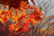 Погода в Черноземье: осень возвращается на месяц назад