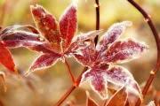 Погода в Черноземье: в выходные резко похолодает