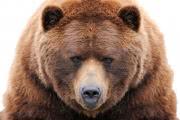 Камчатский город Елизово посетил бурый медведь