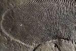 Старейшее животное на Земле оказалось еще старше