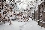 В Москве из-за сильного ветра упали семь деревьев
