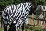 Почему зебра полосатая? Необычный эксперимент