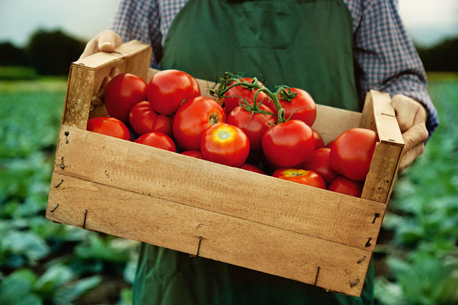 Почему помидоры на вкус не похожи на помидоры?
